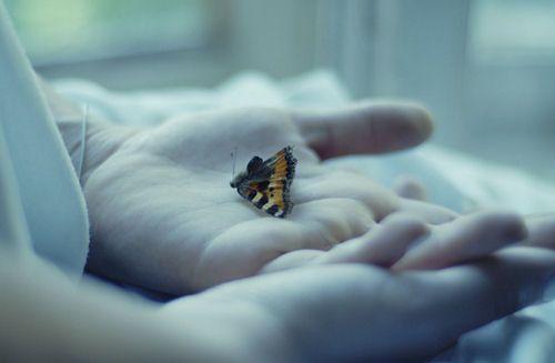 Las mariposas tiritan bajo lanieve